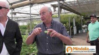 Plantas que curan: Josep Pamiés y Txumari Alfaro, Parte2. Gordolobo,estevia,espirulina…