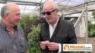 Kalanchoe, aloe vera, kalanchoe…Plantas que curan: Josep Pamiés y Txumari Alfaro, Parte4