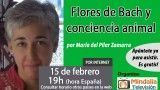 15/02/17 Flores de Bach y conciencia animal por María del Pilar Zamarra